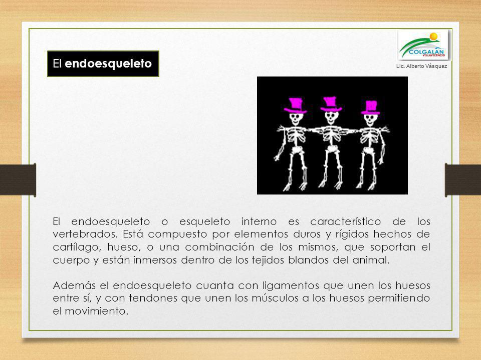 Lic. Alberto Vásquez El endoesqueleto.