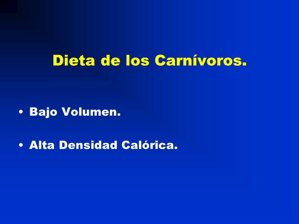Dieta de los Carnívoros.