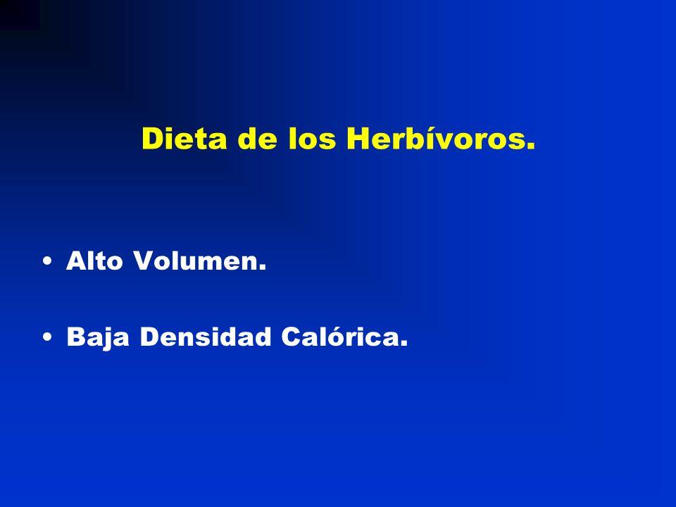Dieta de los Herbívoros.