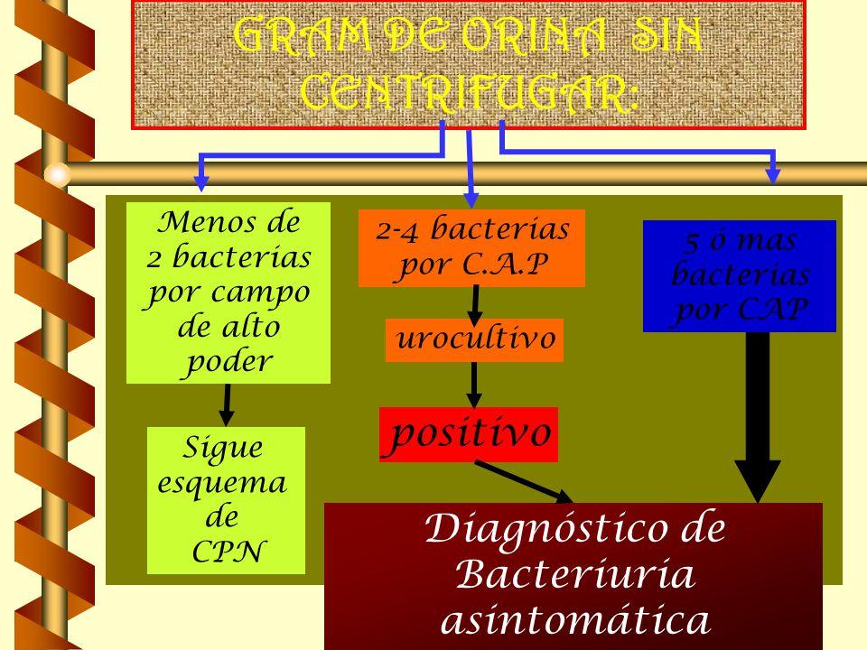 GRAM DE ORINA SIN CENTRIFUGAR: