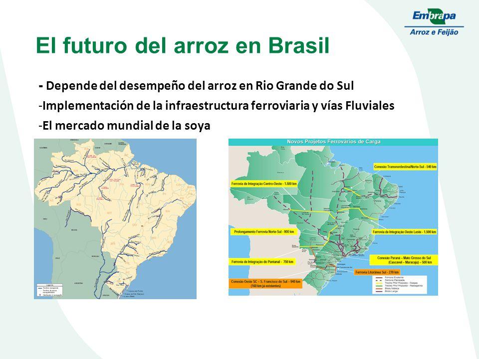 El futuro del arroz en Brasil