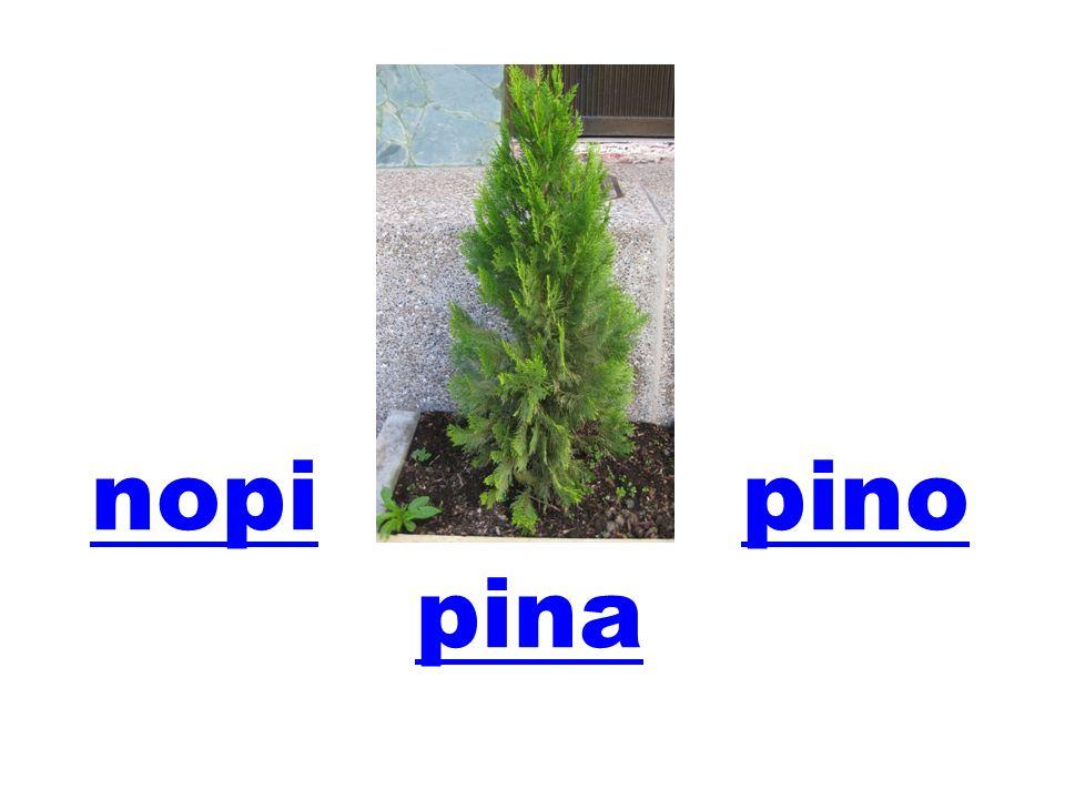 nopi pino pina