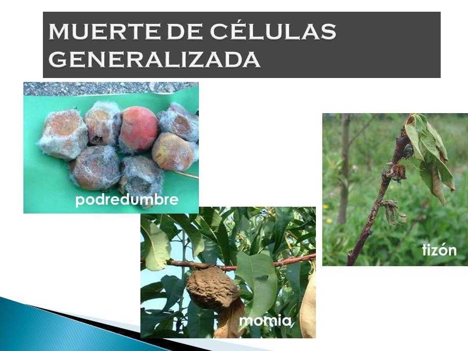 MUERTE DE CÉLULAS GENERALIZADA