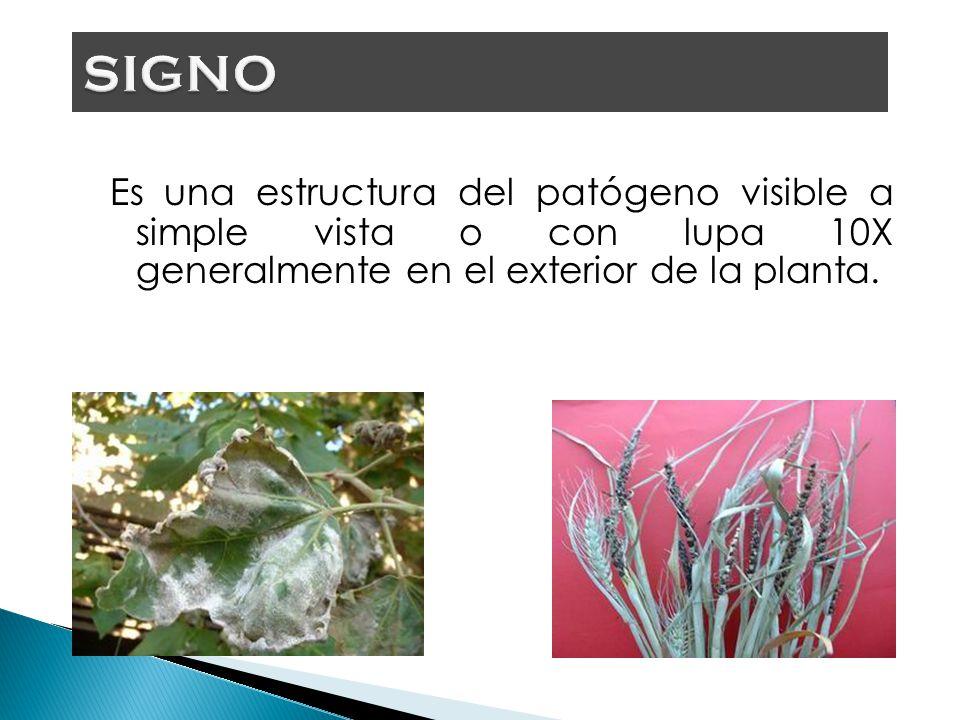SIGNO Es una estructura del patógeno visible a simple vista o con lupa 10X generalmente en el exterior de la planta.