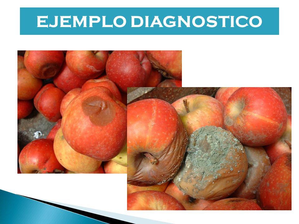 EJEMPLO DIAGNOSTICO bibliografia