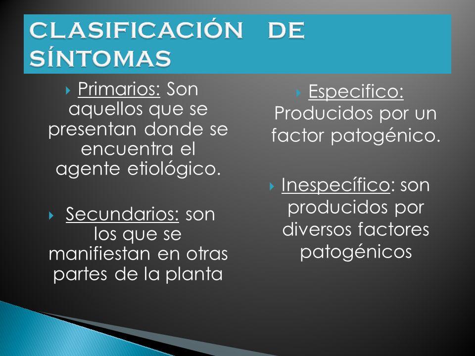 CLASIFICACIÓN DE SÍNTOMAS