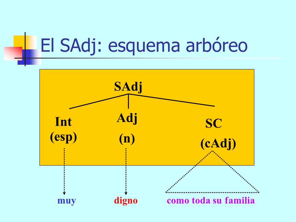 El SAdj: esquema arbóreo