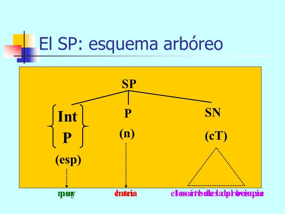 El SP: esquema arbóreo Int P SP SN P (n) (cT) (esp)