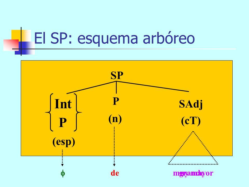 El SP: esquema arbóreo Int P SP P SAdj (n) (cT) (esp)  de grande
