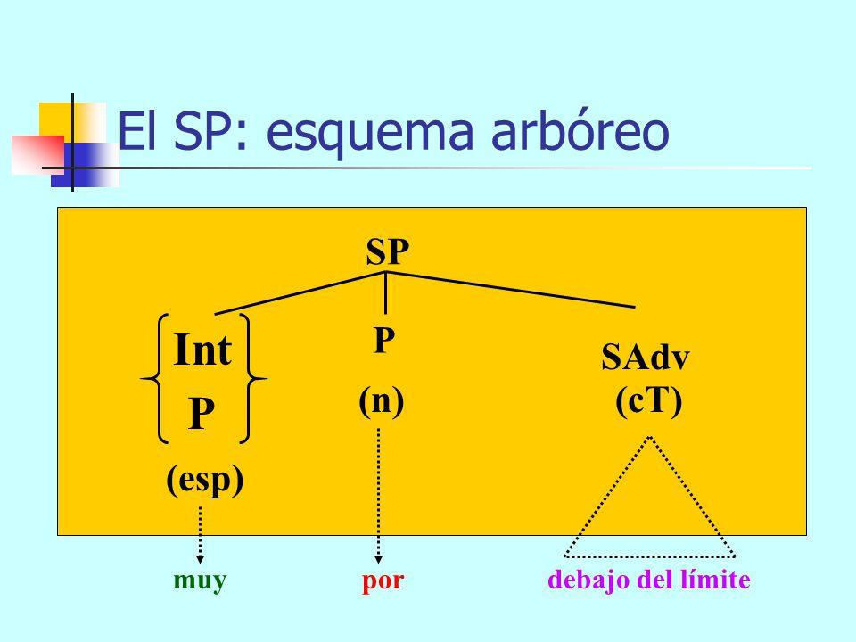 El SP: esquema arbóreo Int P SP P SAdv (n) (cT) (esp)