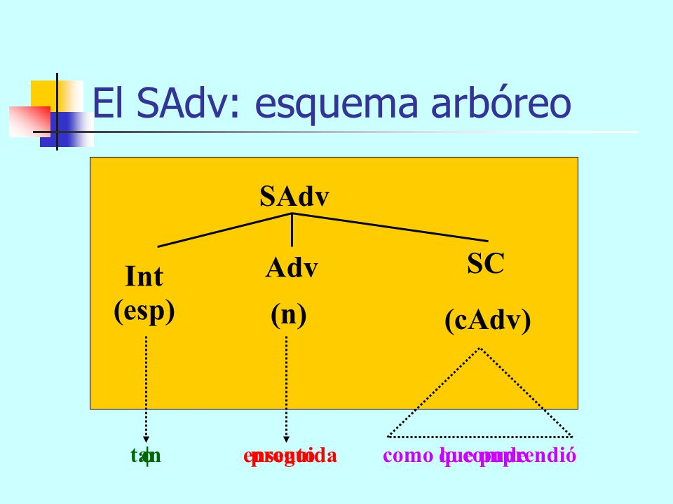 El SAdv: esquema arbóreo