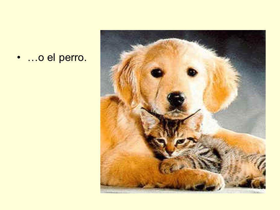 …o el perro.