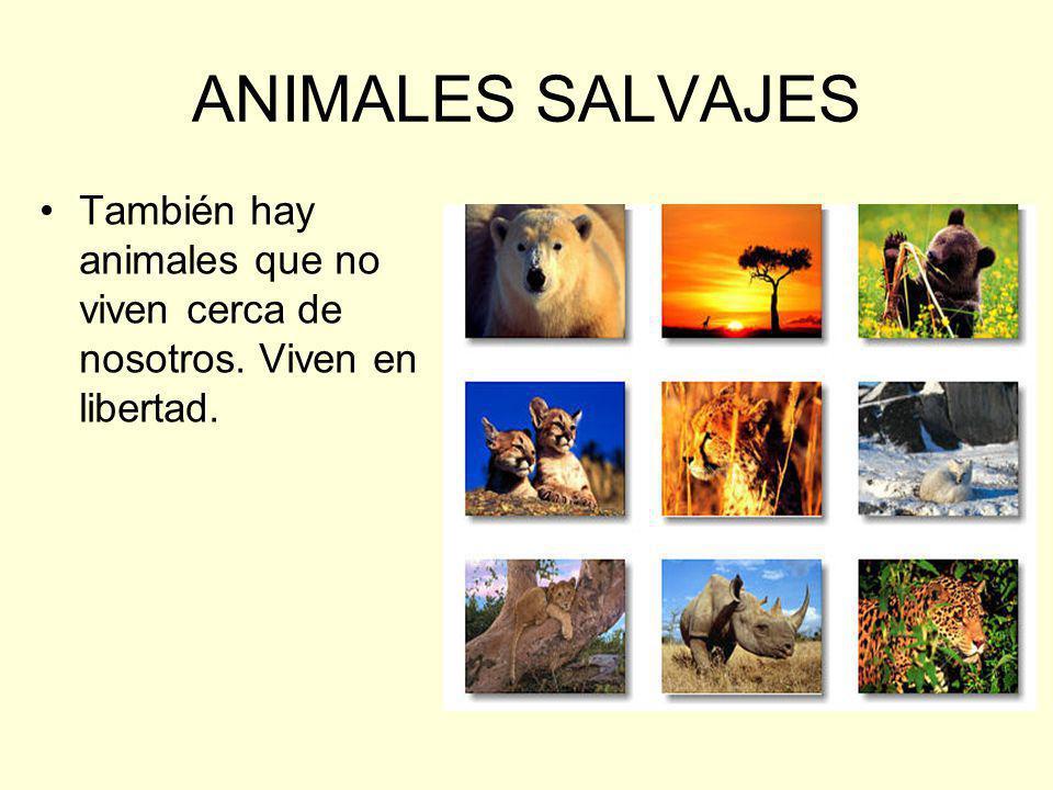 ANIMALES SALVAJES También hay animales que no viven cerca de nosotros. Viven en libertad.
