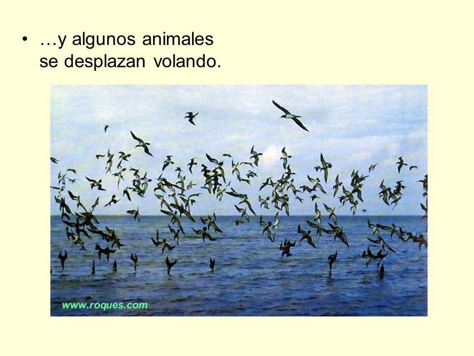 …y algunos animales se desplazan volando.