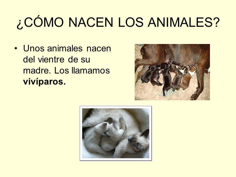 ¿CÓMO NACEN LOS ANIMALES