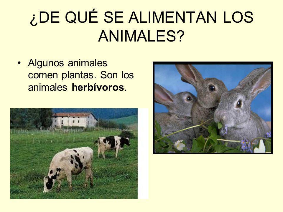 ¿DE QUÉ SE ALIMENTAN LOS ANIMALES