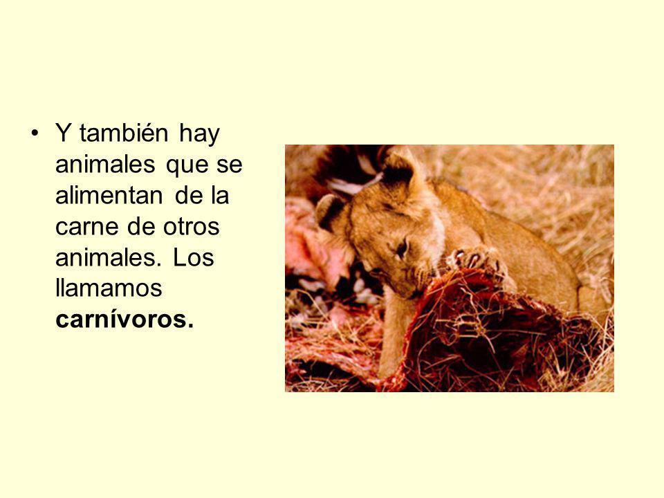 Y también hay animales que se alimentan de la carne de otros animales