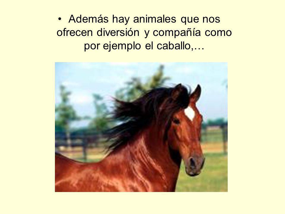 Además hay animales que nos ofrecen diversión y compañía como por ejemplo el caballo,…