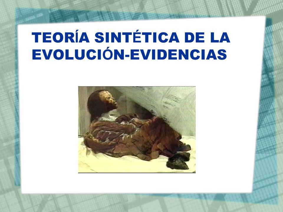 TEORÍA SINTÉTICA DE LA EVOLUCIÓN-EVIDENCIAS