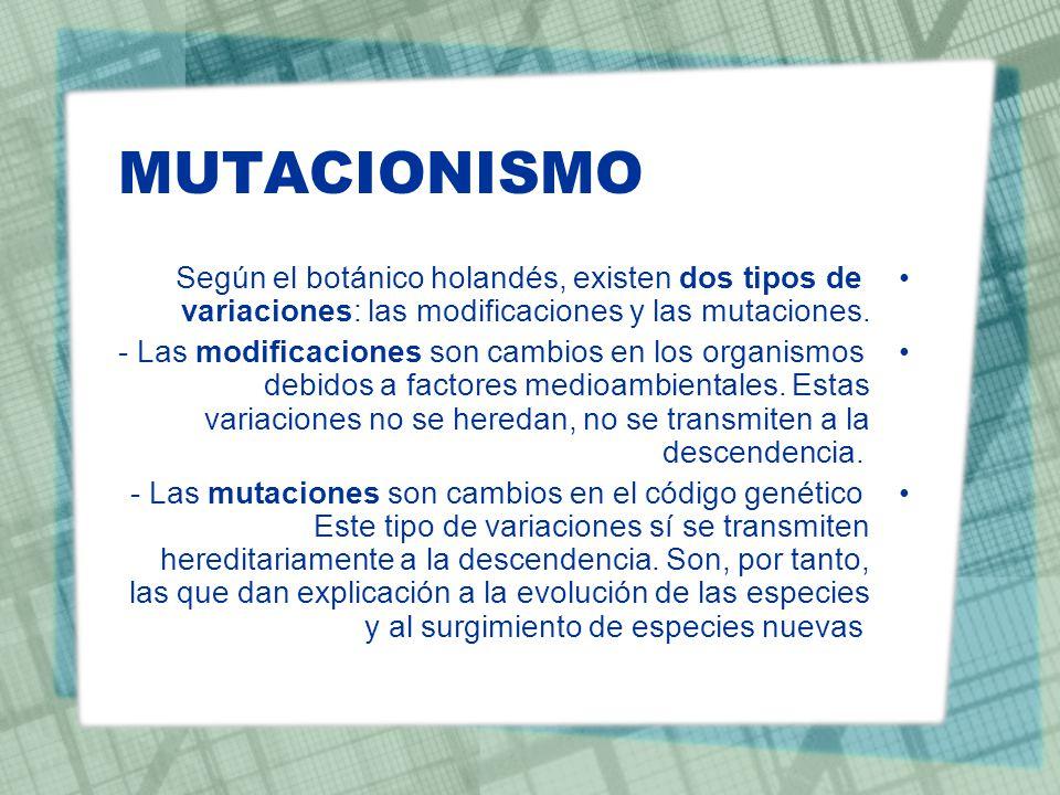 MUTACIONISMO Según el botánico holandés, existen dos tipos de variaciones: las modificaciones y las mutaciones.