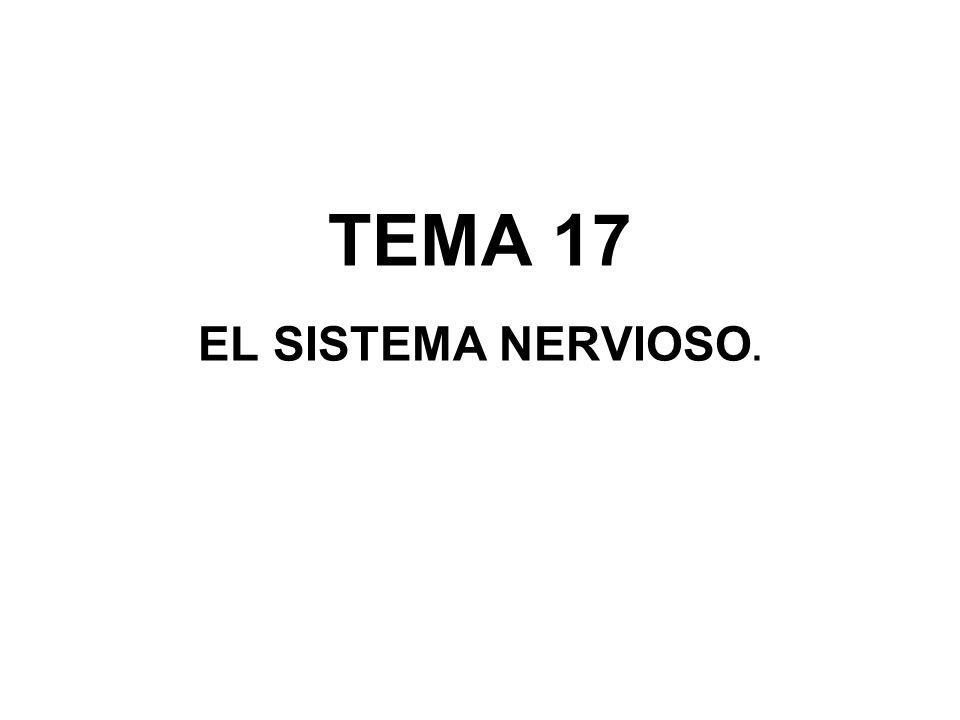 TEMA 17 EL SISTEMA NERVIOSO.
