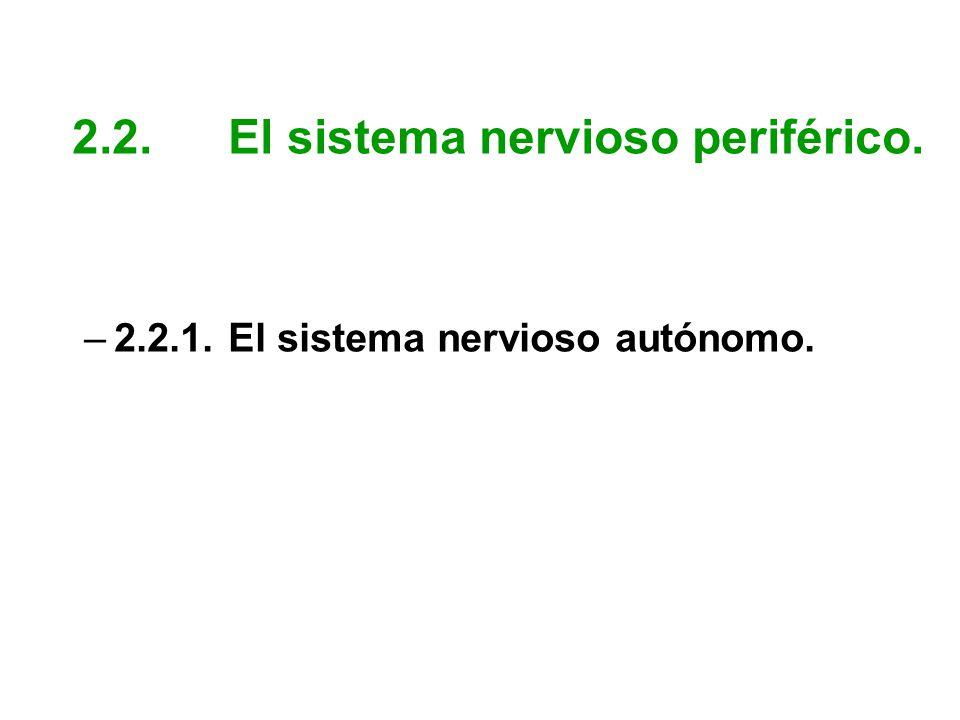 2.2. El sistema nervioso periférico.