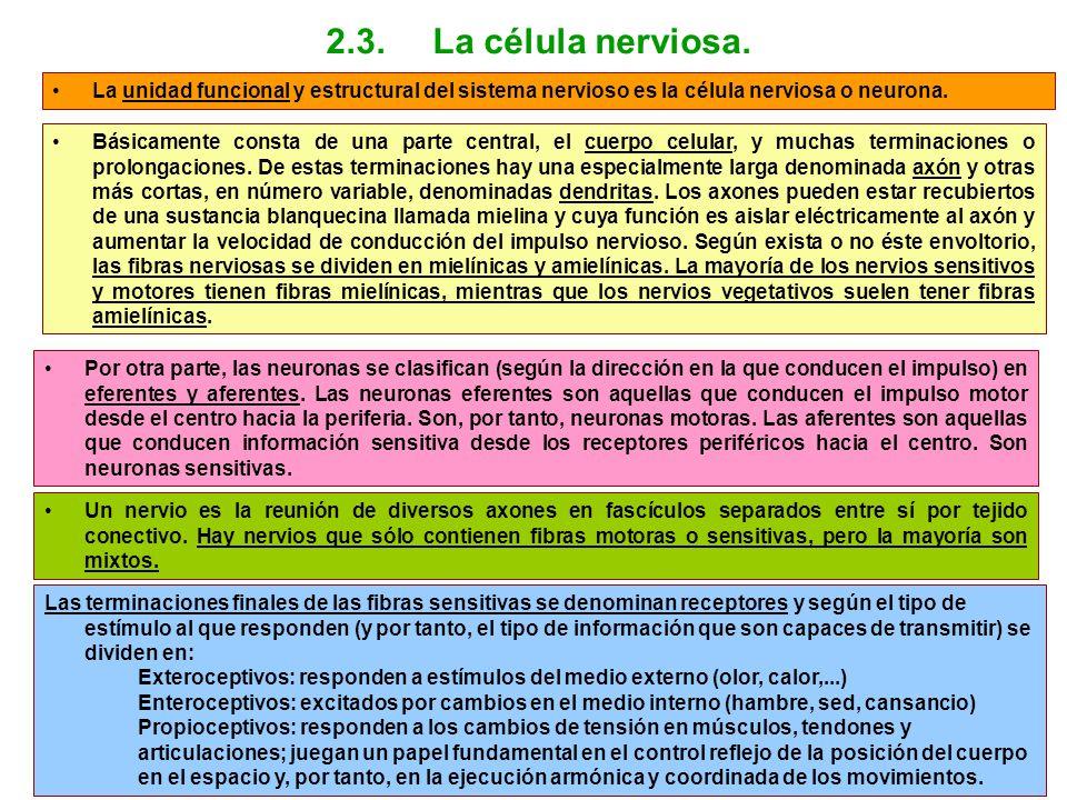 2.3. La célula nerviosa. La unidad funcional y estructural del sistema nervioso es la célula nerviosa o neurona.