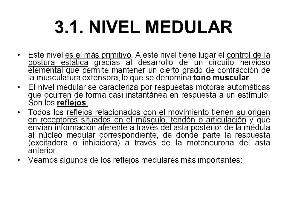 3.1. NIVEL MEDULAR