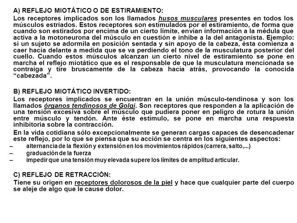A) REFLEJO MIOTÁTICO O DE ESTIRAMIENTO:
