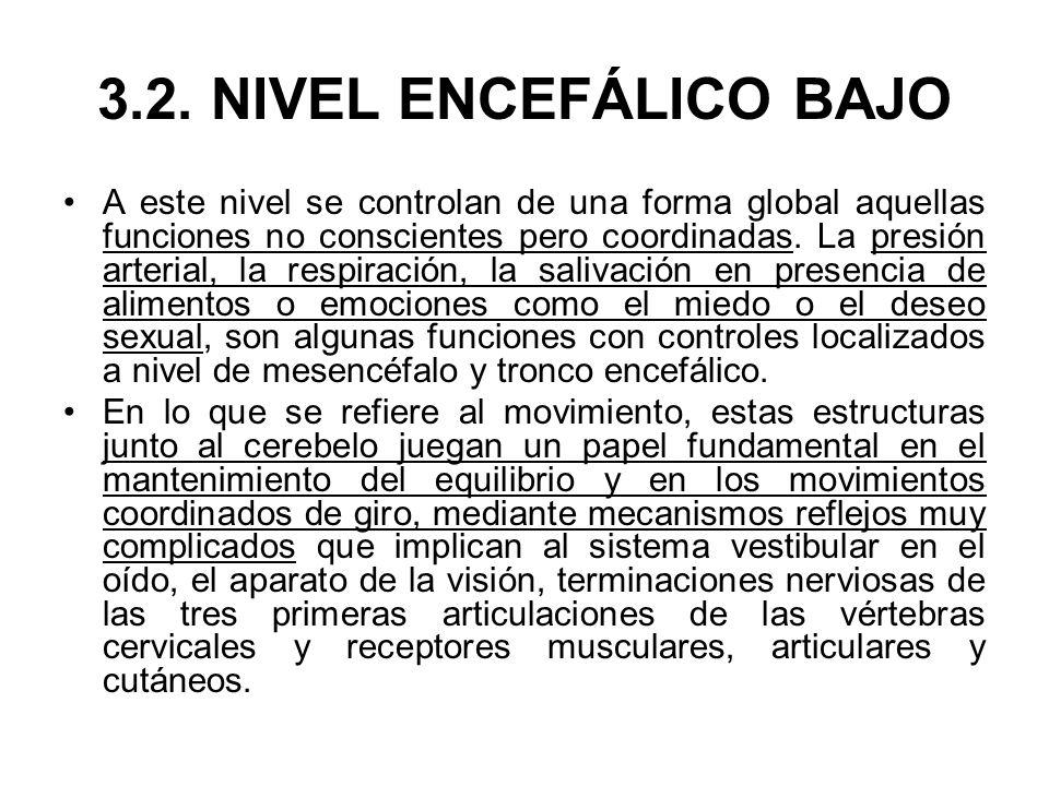 3.2. NIVEL ENCEFÁLICO BAJO