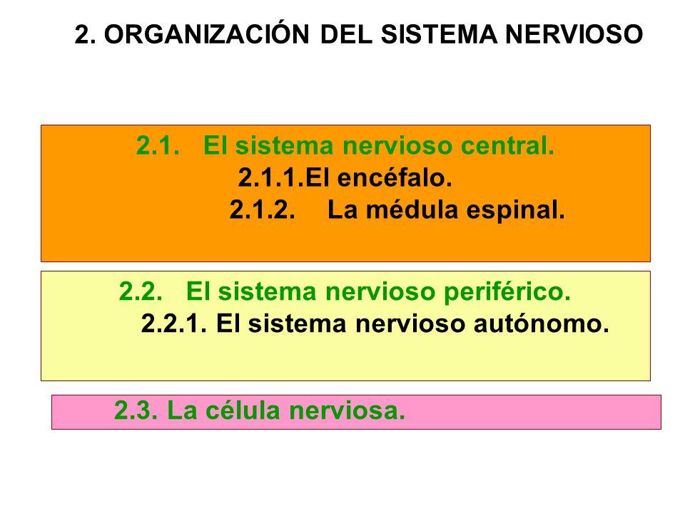 2. ORGANIZACIÓN DEL SISTEMA NERVIOSO