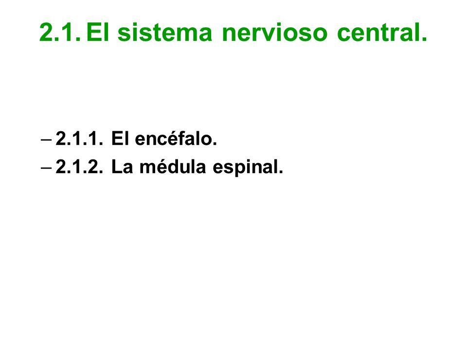 2.1. El sistema nervioso central.