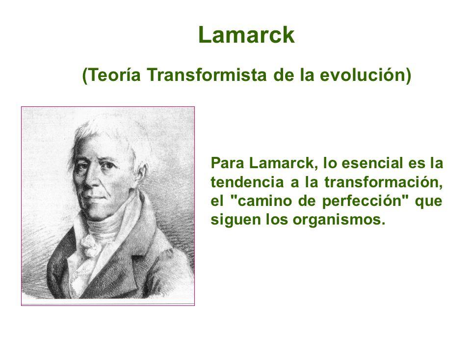 (Teoría Transformista de la evolución)
