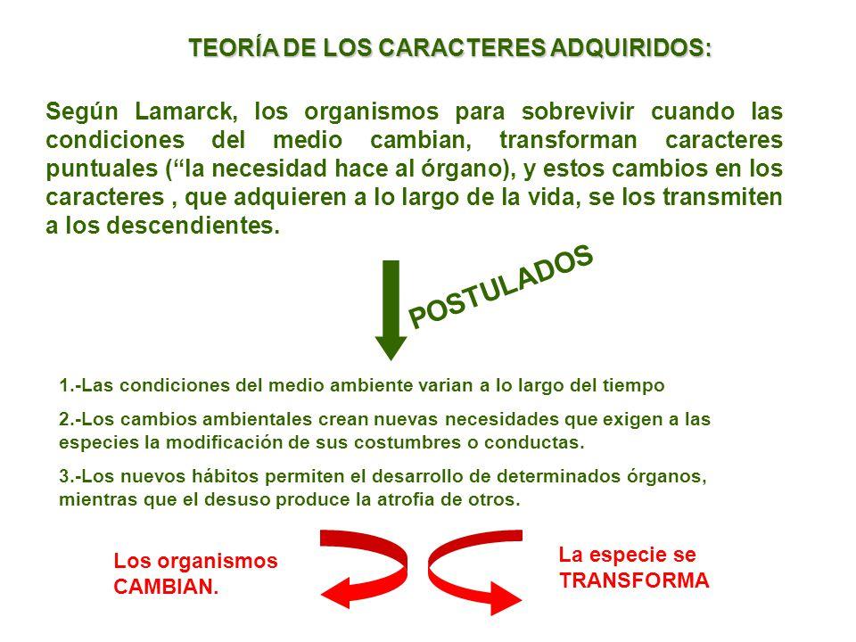 POSTULADOS TEORÍA DE LOS CARACTERES ADQUIRIDOS: