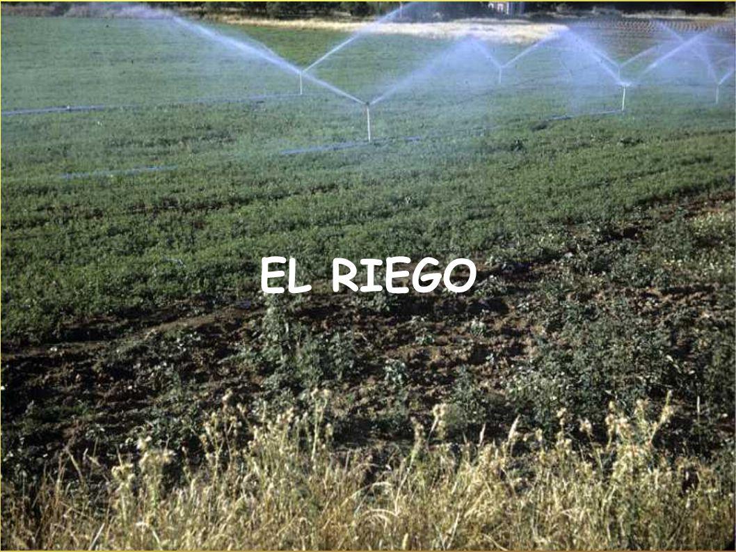 EL RIEGO