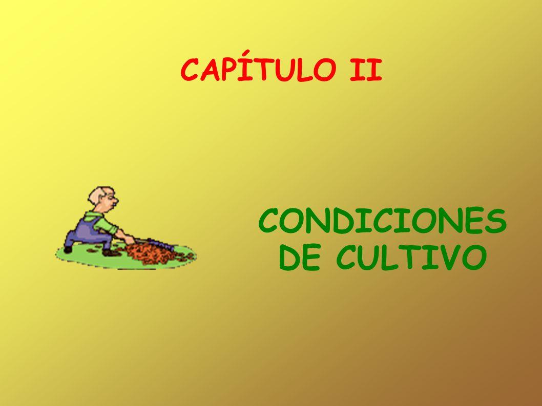 CONDICIONES DE CULTIVO