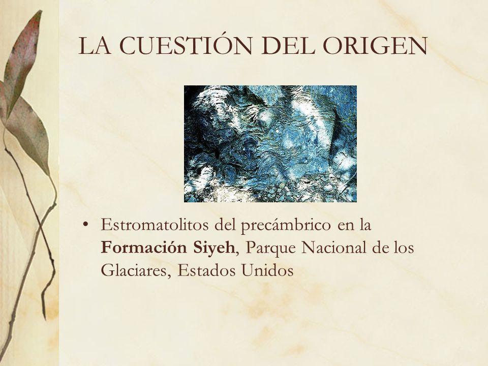 LA CUESTIÓN DEL ORIGEN Estromatolitos del precámbrico en la Formación Siyeh, Parque Nacional de los Glaciares, Estados Unidos.