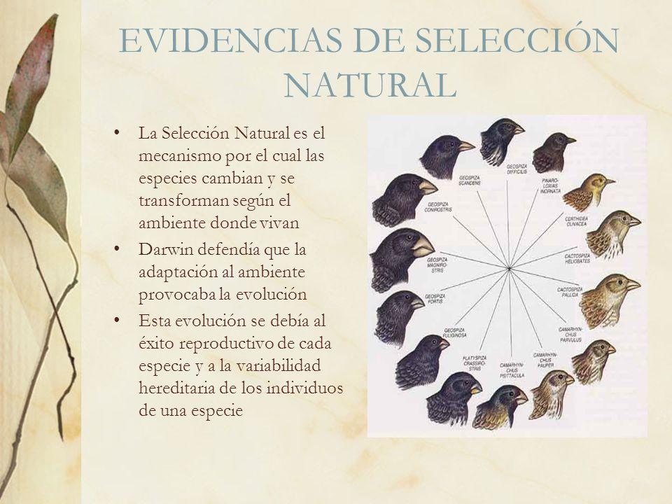 EVIDENCIAS DE SELECCIÓN NATURAL