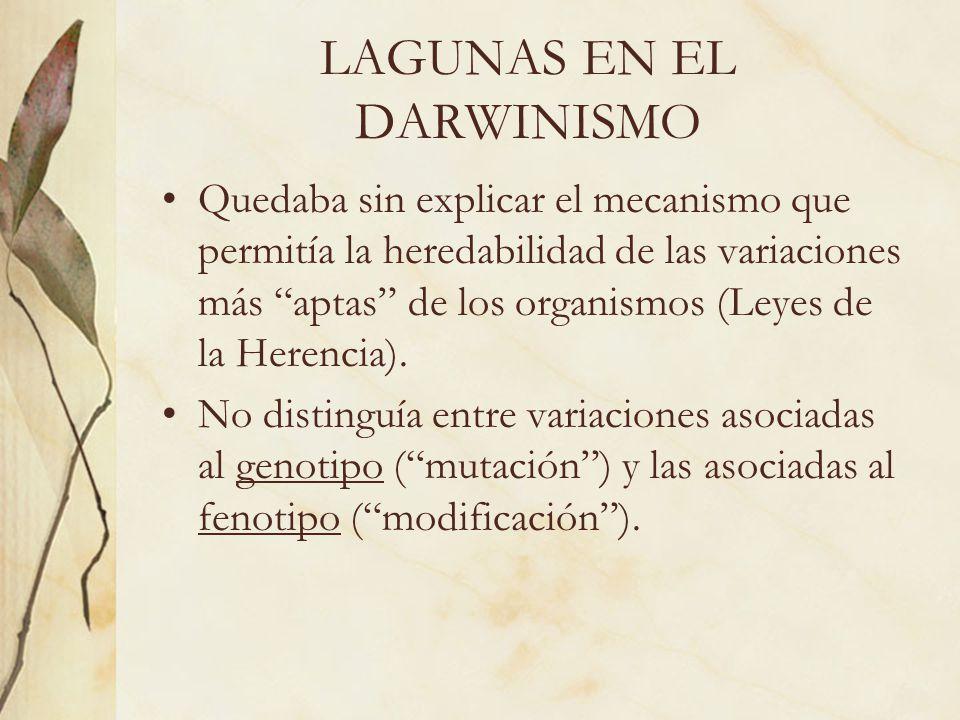 LAGUNAS EN EL DARWINISMO