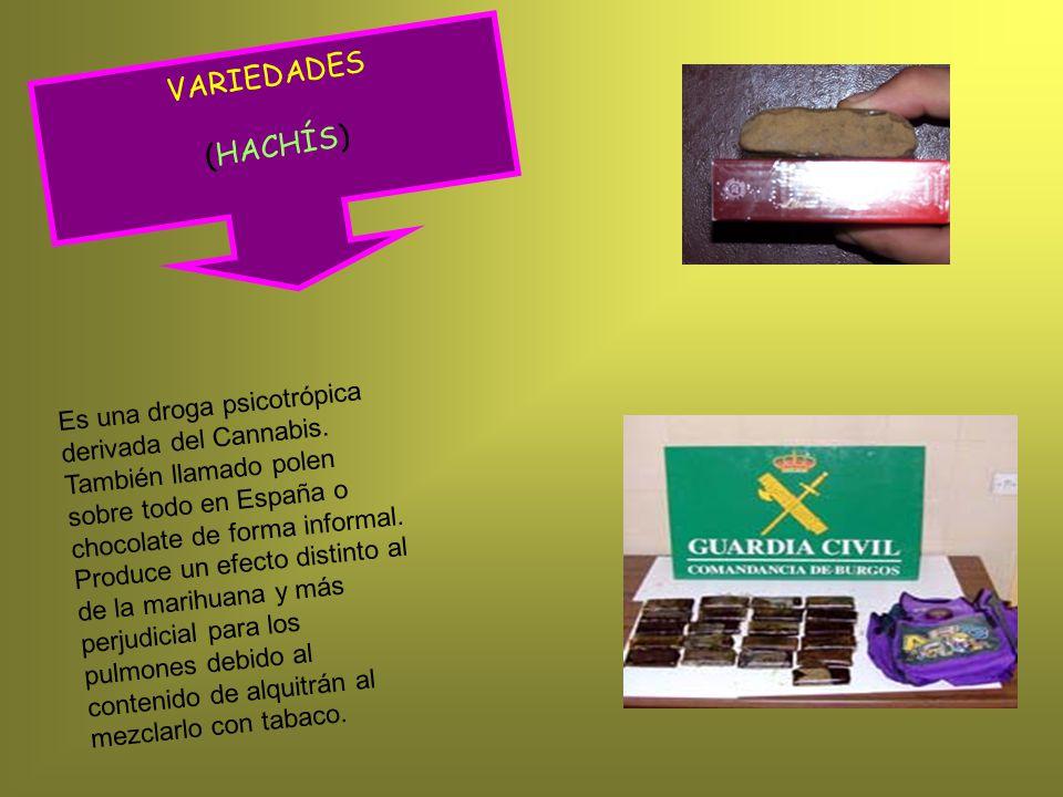 VARIEDADES (HACHÍS)
