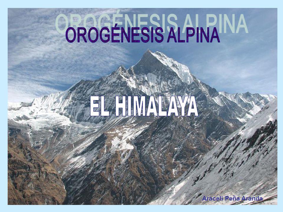 OROGÉNESIS ALPINA EL HIMALAYA Araceli Peña Aranda