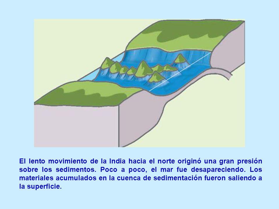 El lento movimiento de la India hacia el norte originó una gran presión sobre los sedimentos.