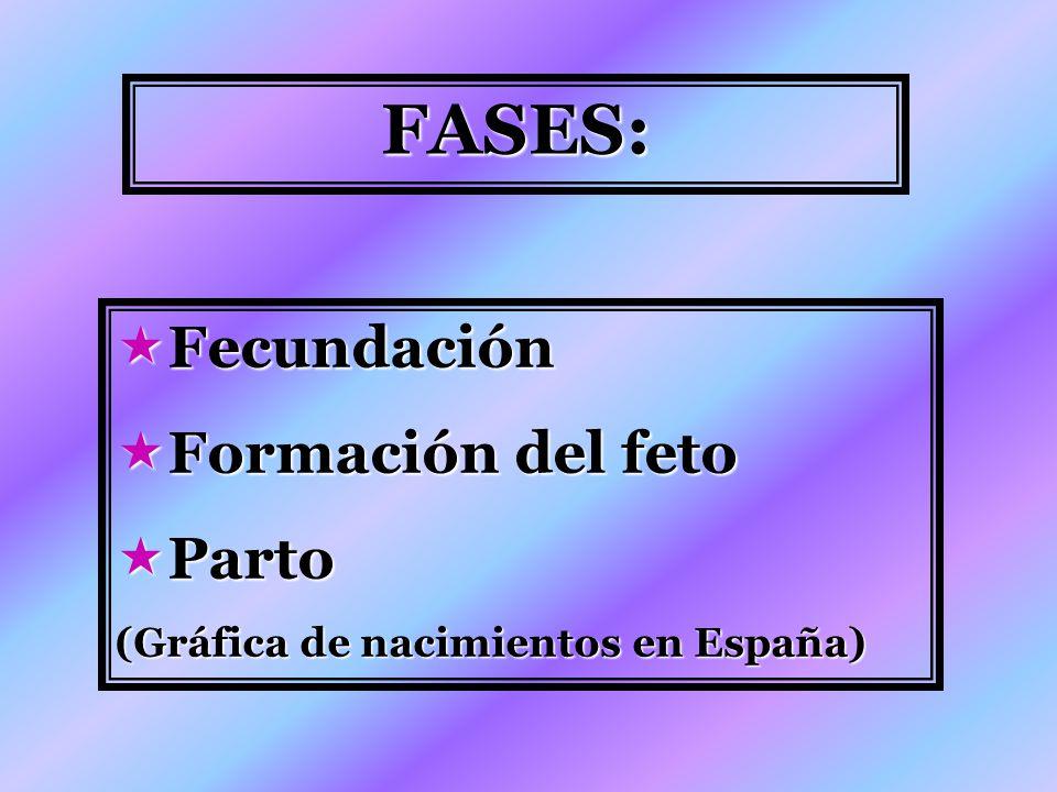 FASES: Fecundación Formación del feto Parto