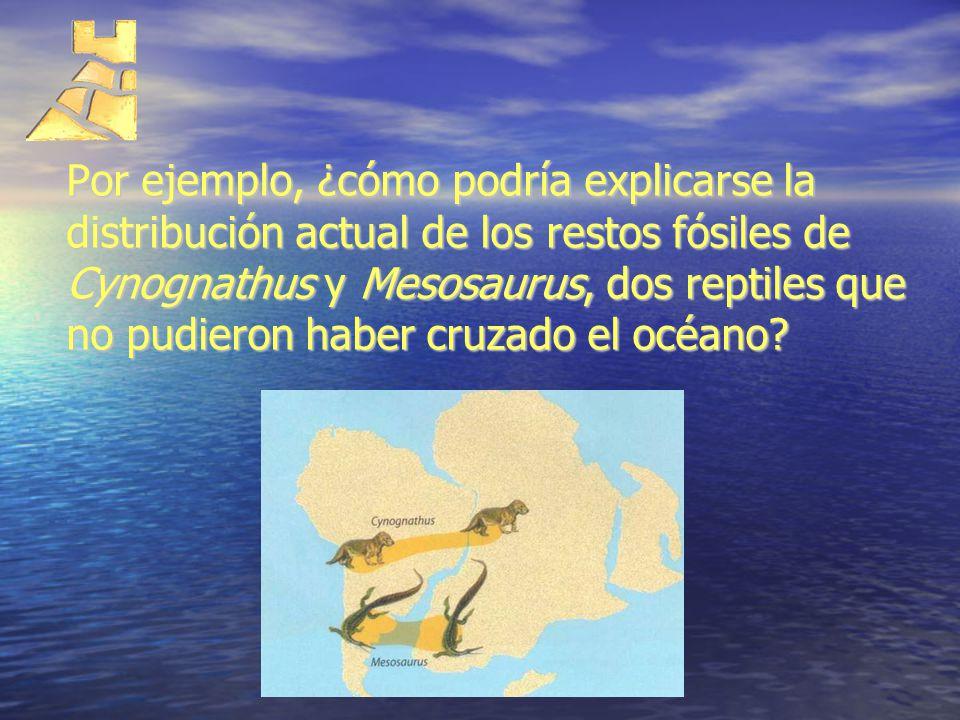 Por ejemplo, ¿cómo podría explicarse la distribución actual de los restos fósiles de Cynognathus y Mesosaurus, dos reptiles que no pudieron haber cruzado el océano