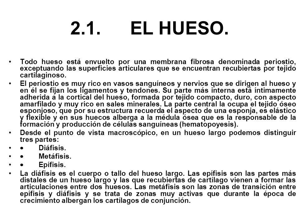 2.1. EL HUESO.