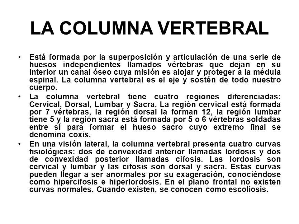 LA COLUMNA VERTEBRAL