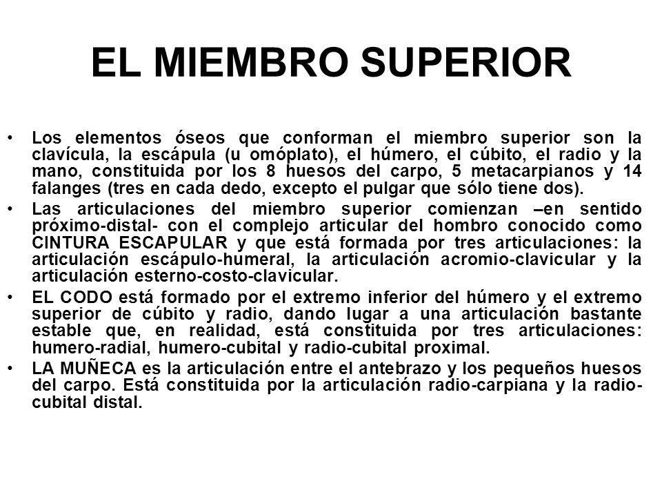 EL MIEMBRO SUPERIOR