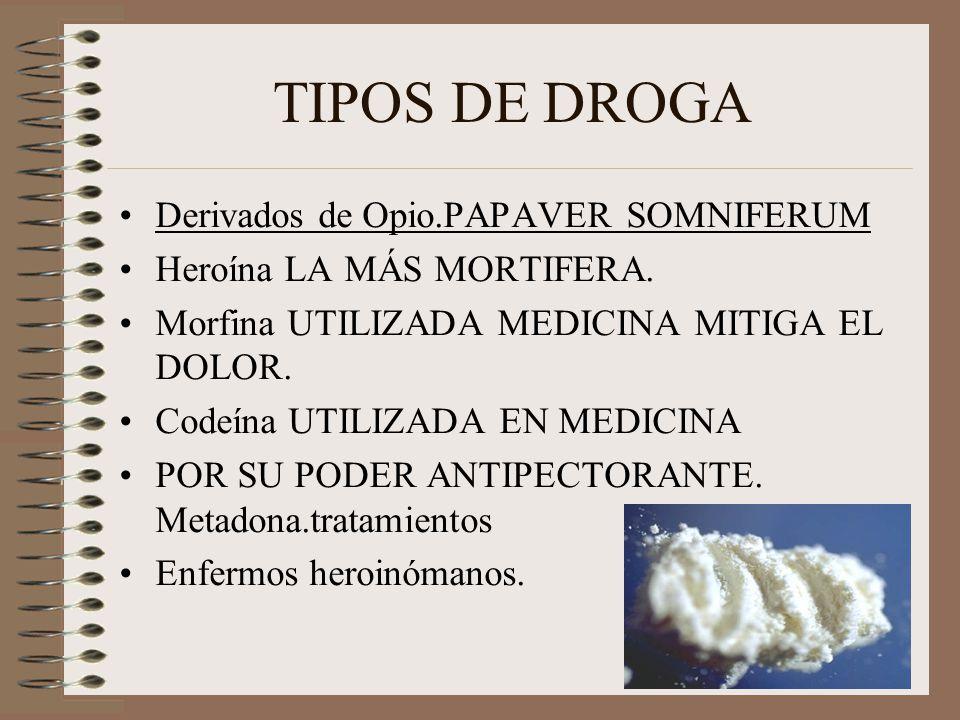 TIPOS DE DROGA Derivados de Opio.PAPAVER SOMNIFERUM