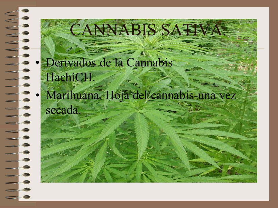 CANNABIS SATIVA. Derivados de la Cannabis HachíCH.