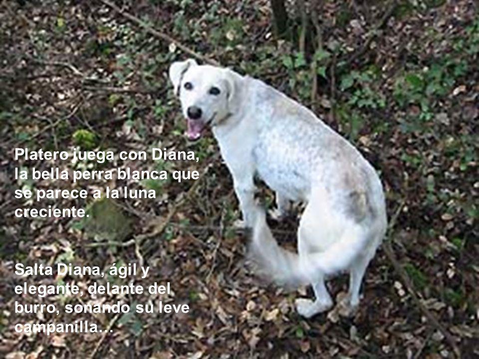 Platero juega con Diana, la bella perra blanca que se parece a la luna creciente.